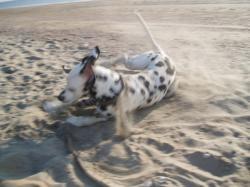 Sandbad